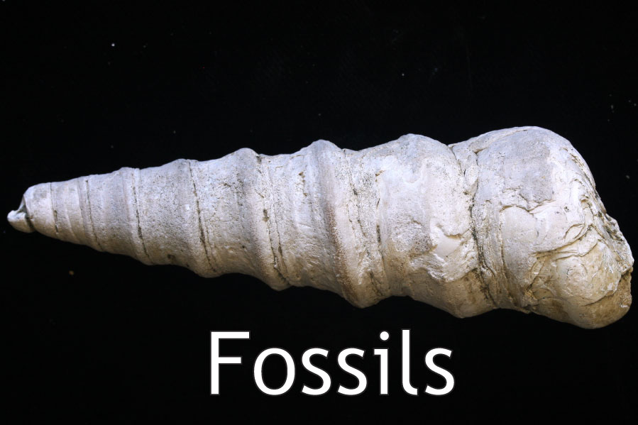fossil headliner