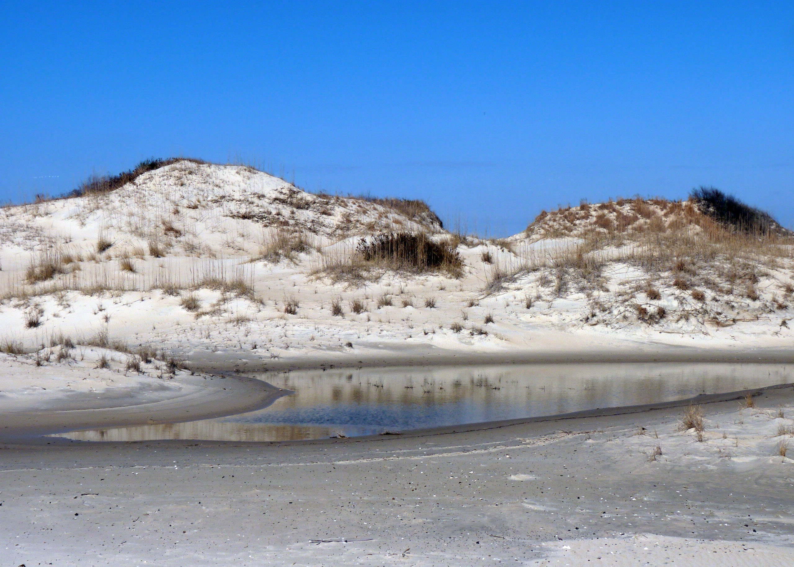 Dunes At False Cape State Park In Virginia Beach Are Common Features Along The